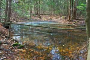 forested vernal pool