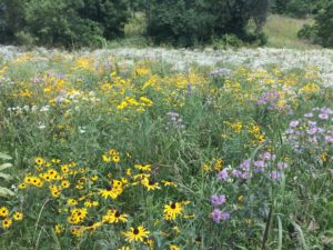 wildflowers in field