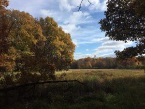 open area in woods