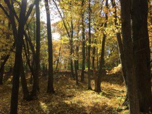 Keystone woods