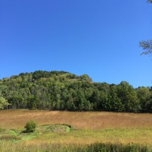 field and wooded bluff
