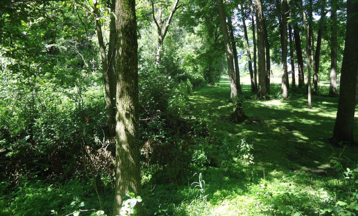 Baihly Woods