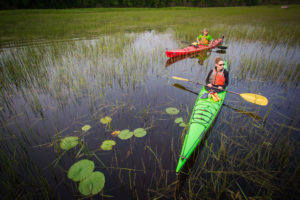 kayaks in wild rice
