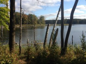 Cooks Lake project