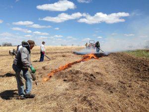 lighting the fire at prescribed prairie burn