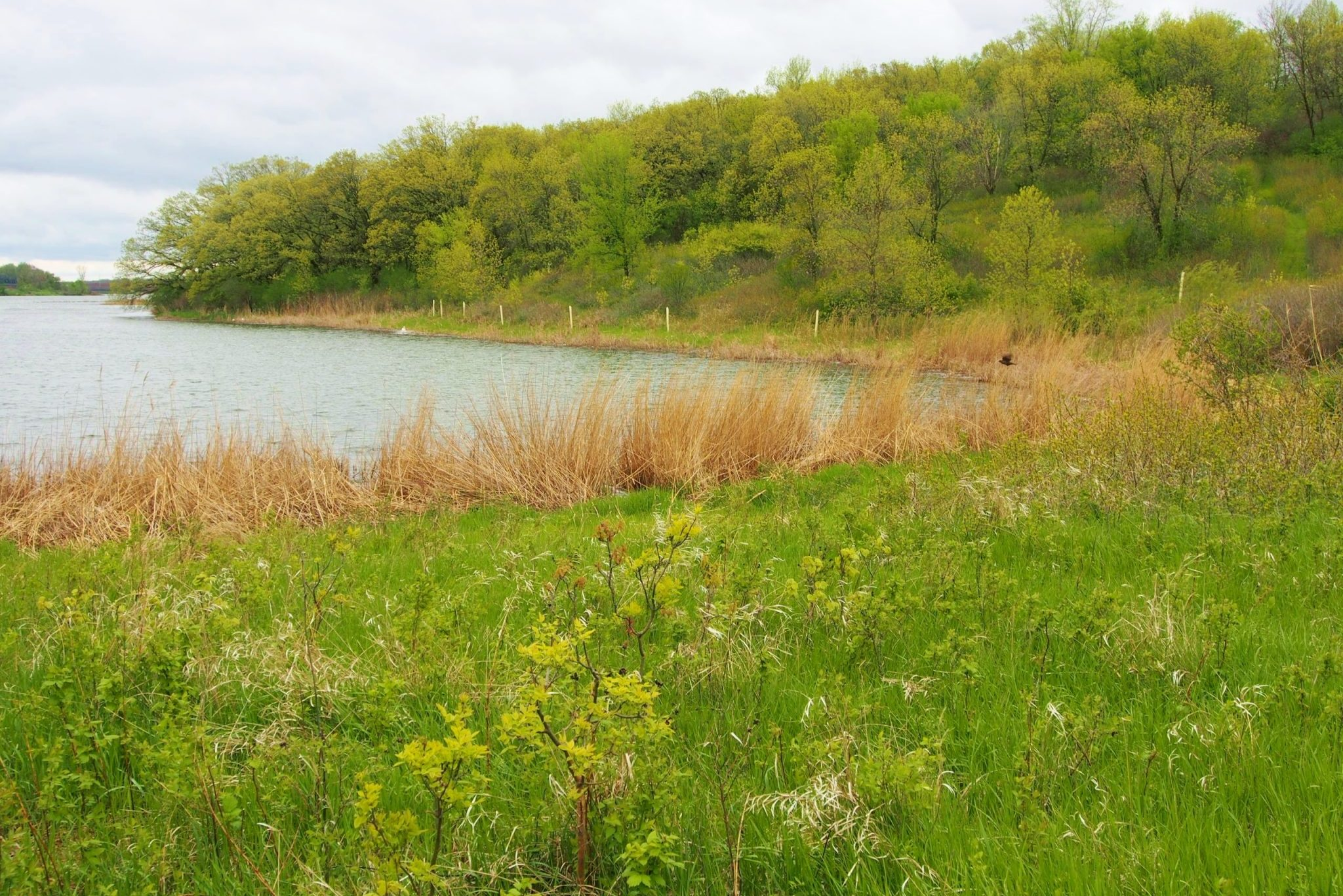 Otter Tail Mineral Lake