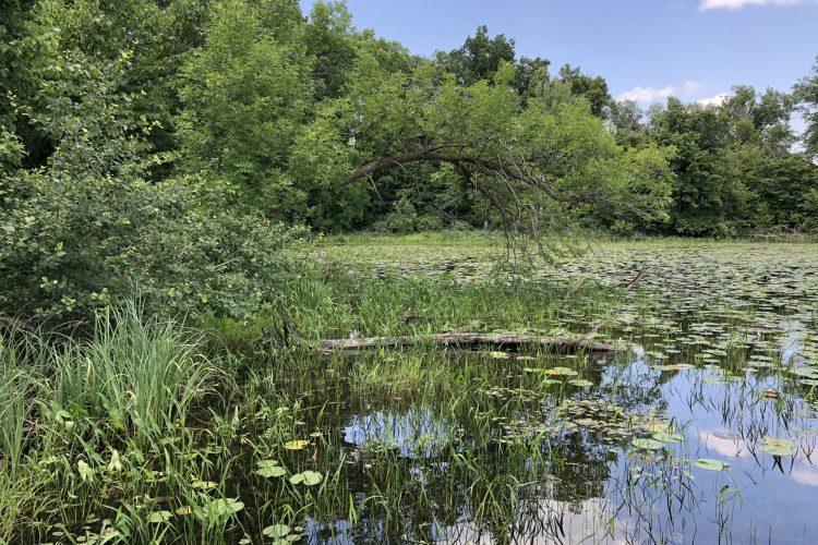 Byer Lake